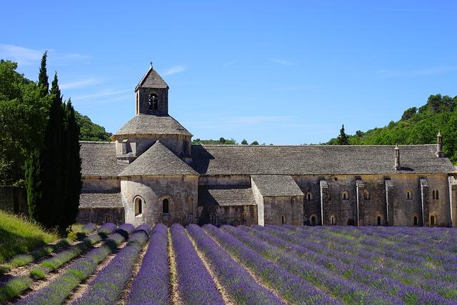 Lavender, Lavender Field, Lavender Cultivation