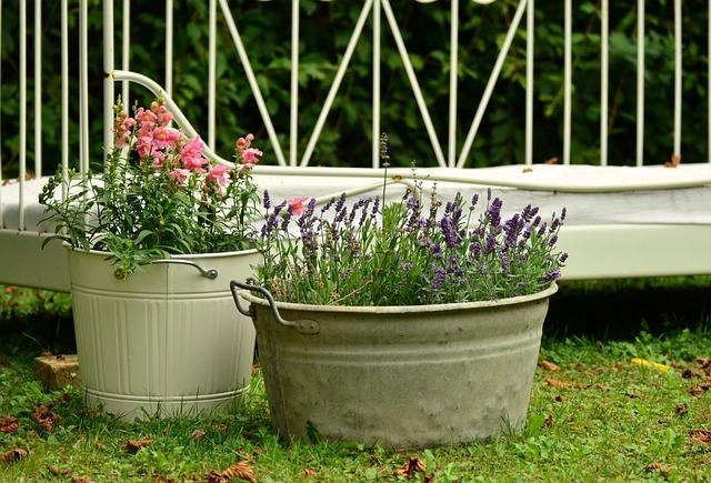 Floral Decoration, Garden, Lavender, Loewenmaeulchen
