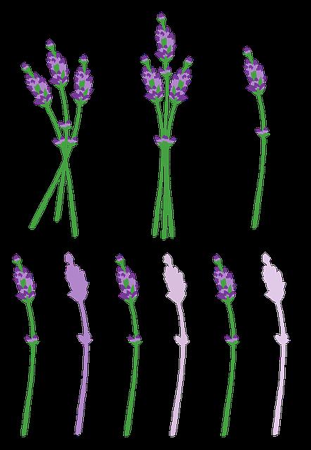 Lavender, Flowers, Provence, Fragrance, Purple, Summer