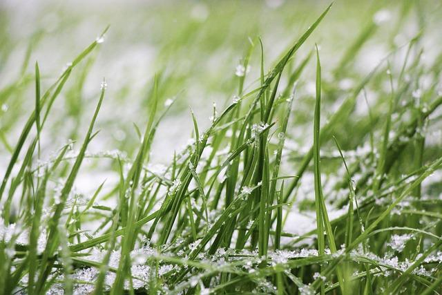 Grass, Snow, Lawn, Frozen, Snow Storm, Snowflake