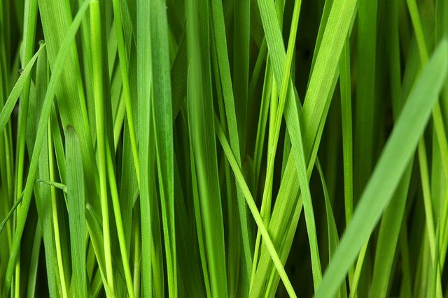 Grass, Lawn, Background, Grassy, Green, Nature, Pattern