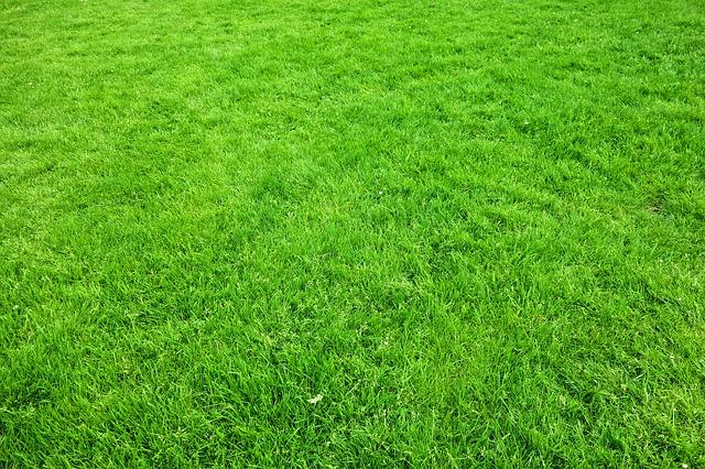 Grass, Lawn, Garden, Green, Lush, Outdoors