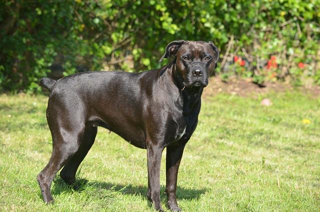 Dog, Mammal, Animal, Lawn, Canine