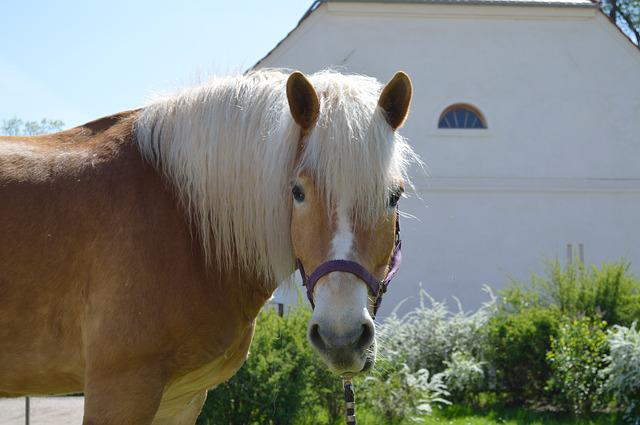 The Horse, Animals, Nature, Farm, Lawn, Mammals, Horse