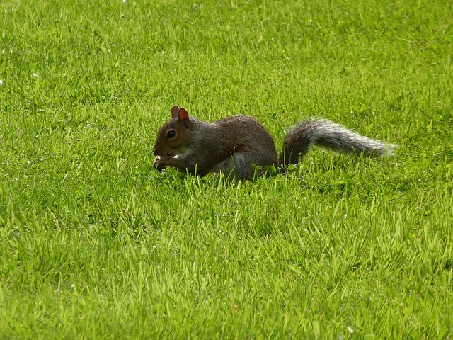 Lawn, Mammals, Nature, Charming, Animals, The Squirrel