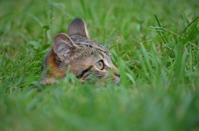 Lawn, Animal, Nature, Fauna, Cute, Cat