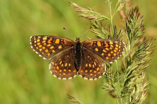 Nature, Butterfly Day, Insect, Summer, Animals, Lawn