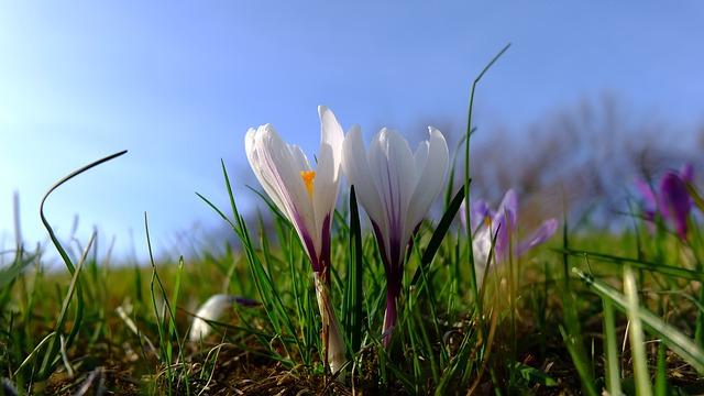 Nature, Lawn, Flower, Plant