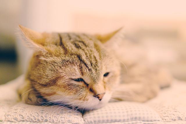 Pet, Cuteness, Cat, Cat Mia, Gel Reviews, Lay Sat