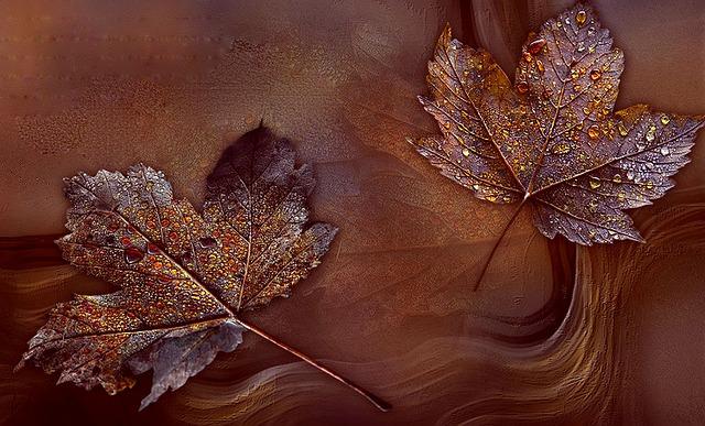 Leaf, Bronze, Arrangement, Nature