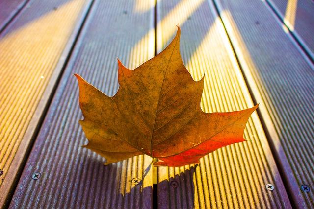 The Leaves, Leaf, Nature, Autumn, Leaves, Autumn Leaves