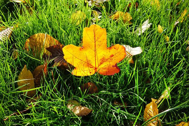 Leaf, Autumn Leaf, Grass, Fallen Leaf, Autumn Colors