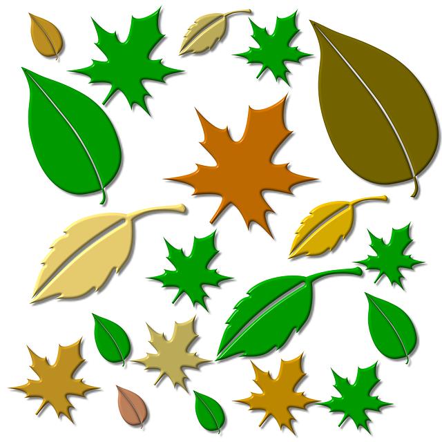 Leaf, Leaves, Autumn Forest, Fall Foliage, Plant
