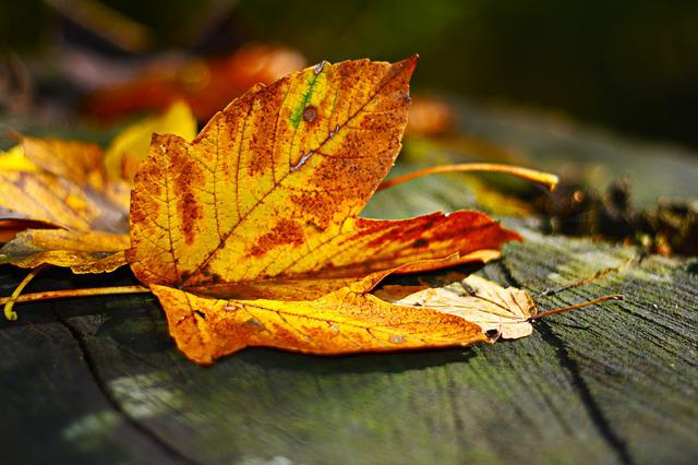 Leaves, Leaf, Autumn, Fall Foliage, Brown, Yellow, Wood