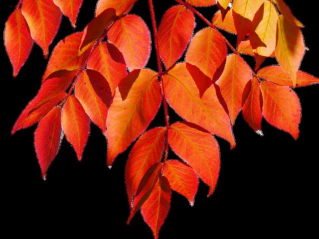 Png, Autumn, Leaves, Nature, Leaf, Colorful Leaf