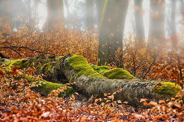 Autumn, Forest, Log, Moss, Leaf, Nature, Season
