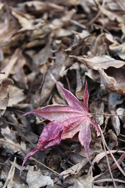 Leaves, Autumn, The Leaves, Leaf, Autumn Leaves