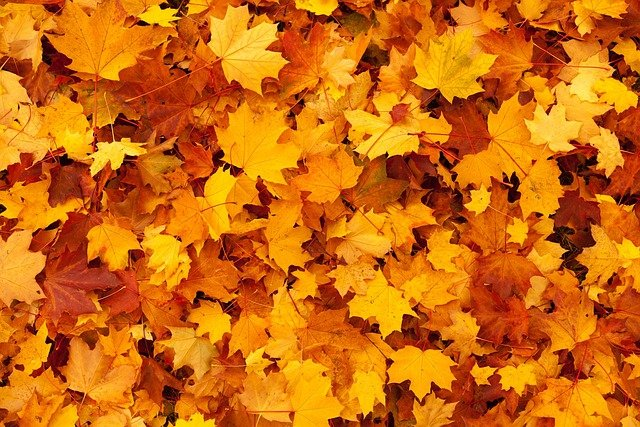 Autumn, Background, Color, Fall, Foliage, Gold, Leaf