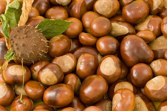 Conkers, Conker, Background, Leaves, Leaf, Thorns