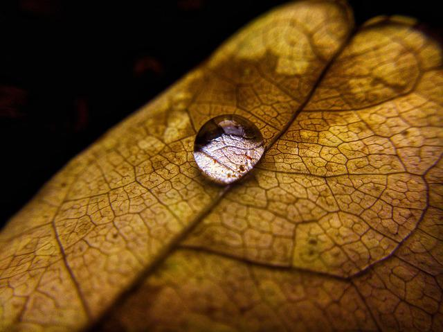 Droplet, Leaf, Nature, Fall, Backgrounds
