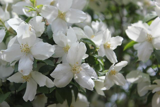 Flower, Flora, Garden, Nature, Leaf, Blossom