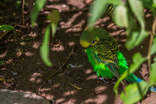 Nature, Animal World, Bird, Leaf, Animal, Budgie