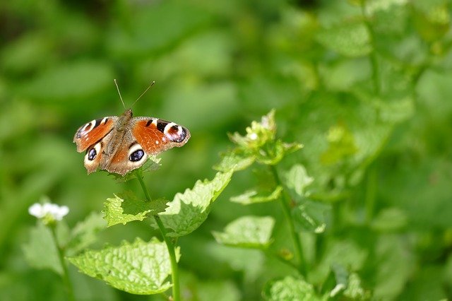 Butterfly, Nature, Leaf, Plant