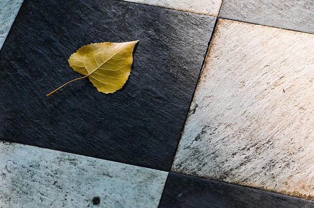 Leaf, Autumn, Yellow, Black, White, Chess, Checkers