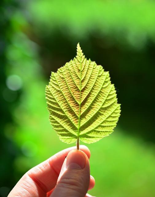 Leaf, Backlighting, Close Up, Sheet Framework, Green