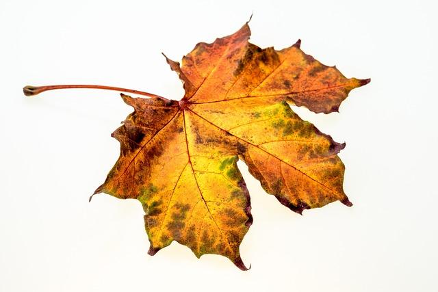 Autumn, Leaves, Leaf, Fall Foliage, Colors Of Autumn