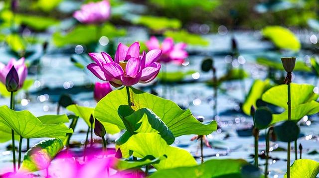 Nature, Flora, Flower, Leaf, Garden, Beautiful, Summer