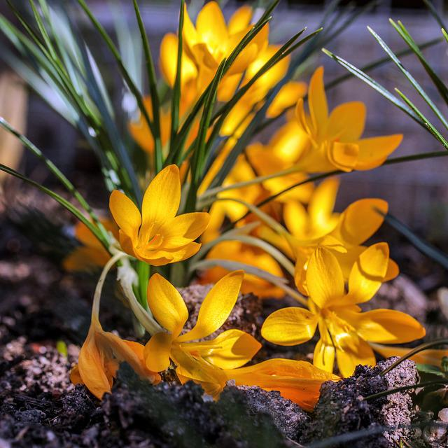 Nature, Plant, Flower, Leaf, Flowers, Garden, Season