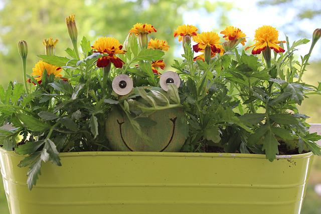Flower, Plant, Nature, Leaf, Floral, Summer, Garden