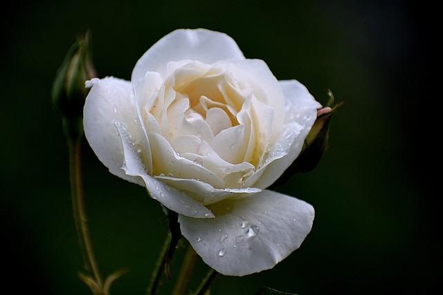 Flower, Flora, Nature, Leaf, Petal, Floral, Blooming