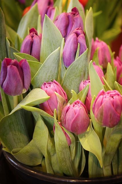 Tulip, Flower, Plant, Nature, Leaf, Floral, Garden