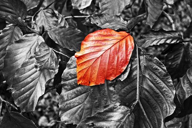 Leaf, Foliage, Twig, Autumn Leaf, Autumn Color