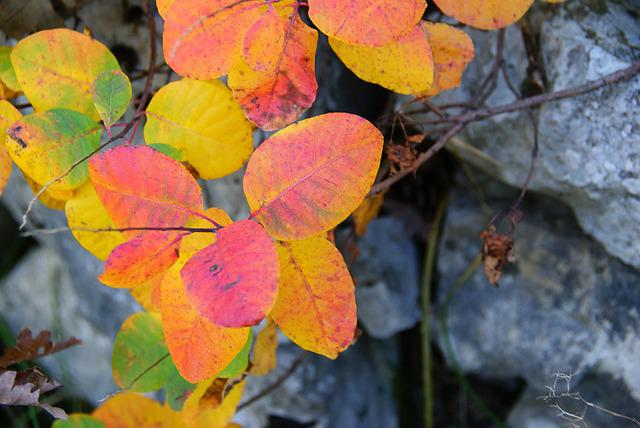 Sumac, Forest, Leaves, Autumn Woods, Leaf, Autumn