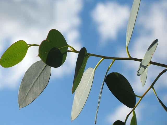 Leaf, Leaves, Branch, Sky, Blue, Green, Fresh, Nature