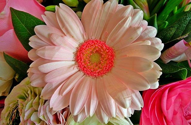 Flower, Gerbera, Nature, Plant, Leaf, Floral, Closeup