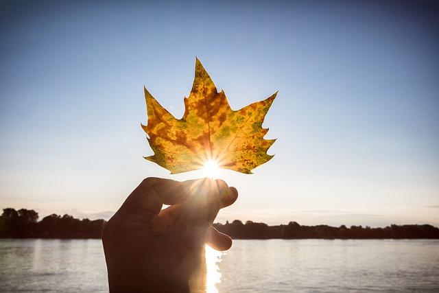 Autumn, Leaf, Sun, Back Light, Golden Autumn