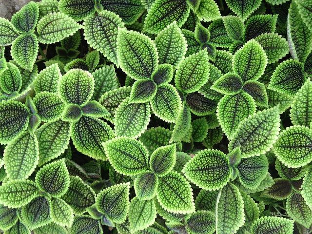 Plant, Leaf, Grass