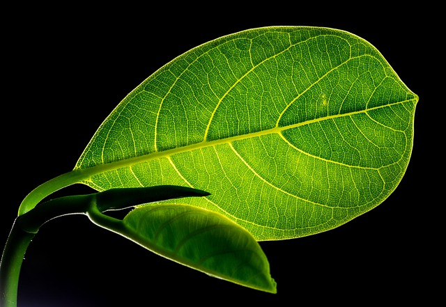 Leaf, Leaves, Jack Fruit Leaf, Green