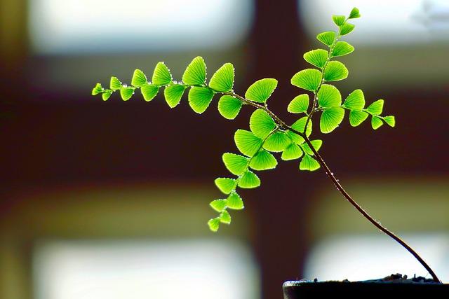 Plant, Fern, Leaf, Green, Fern Leaf, Structure, Ferns