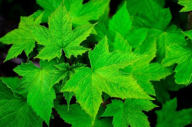 Green, Leaf, Summer