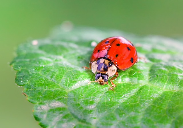 Animals, Insect, Nature, Ladybug, Leaf, Plant, Green