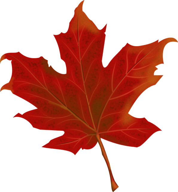 Leaf, Autumn, Autumn Leaves, Fall, Red, Season, Leaves