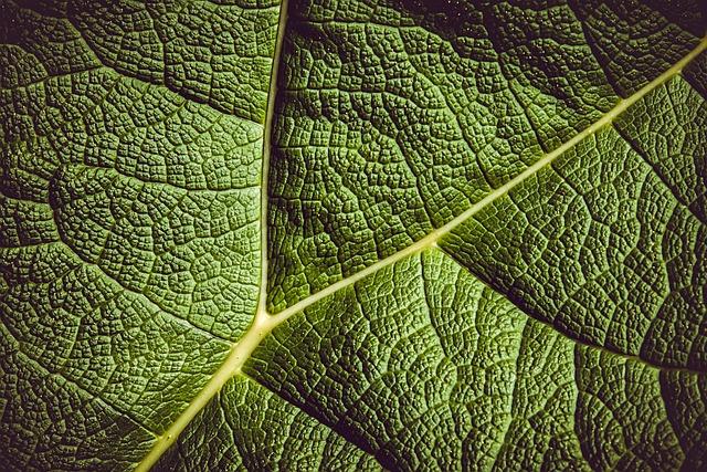 Leaf, Giant Rhubarb, Mammoth Sheet, Giant Leaves