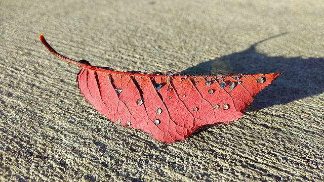 Leaf, Fall, Red, Autumn, Color, November, Maple
