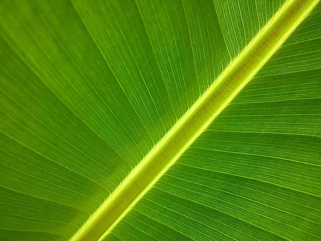 Banana Tree, Banana Leaf, Leaf, Nature