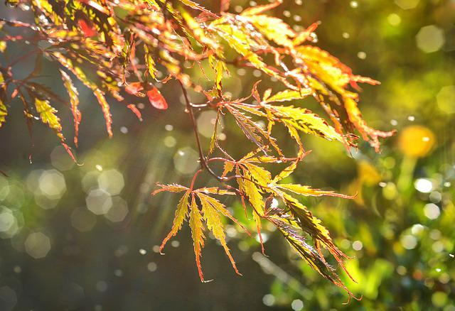 Leaf, Autumn, Maple, Bokeh, Nature